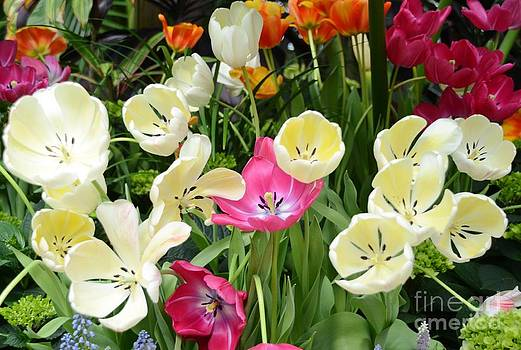 Open Tulips by Kathleen Struckle