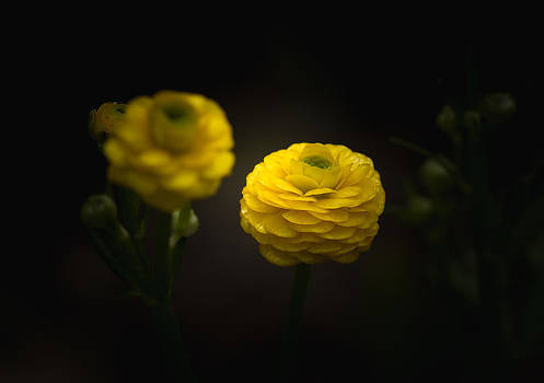 Open Up by Paul Barson
