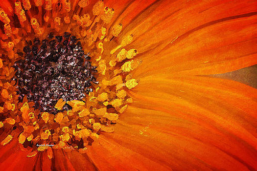 Orange African Daisy by Angela A Stanton