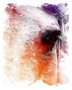 Orange and Violet Abstract Horse by Diana Shively