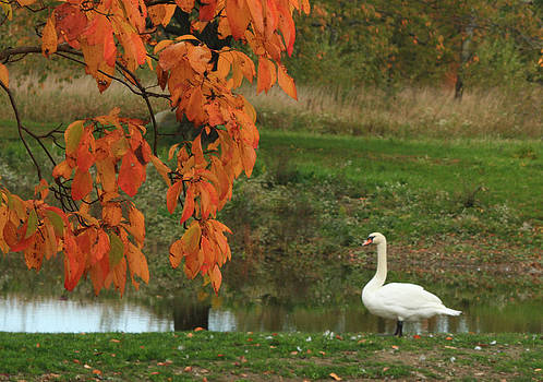 Orange and White by Jim Cotton
