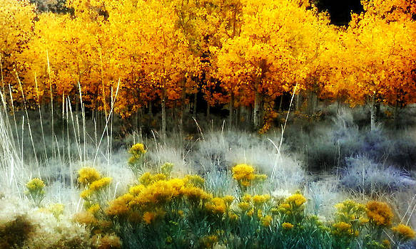 Orange Aspens by Nick Borelli