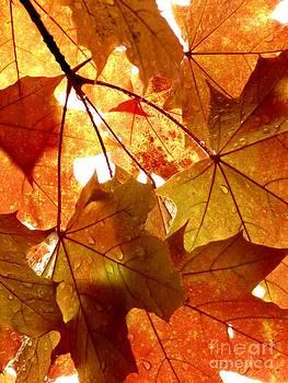 Christine Stack - Orange Autumn Leaves