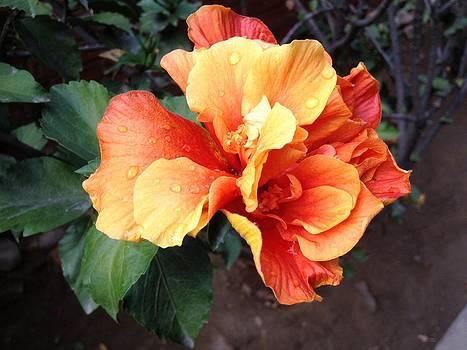Orange Beauty by Diego  Zegarra