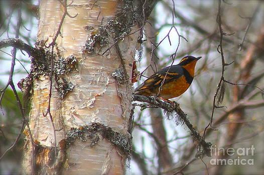 Rick  Monyahan - Orange Bird
