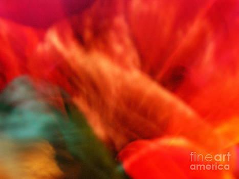 Orange Blossom Opening by Marilyn Martin