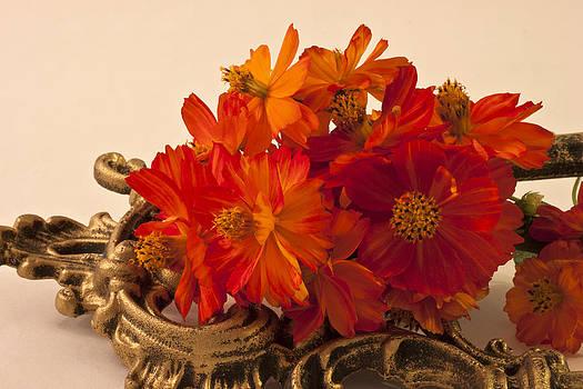 Sandra Foster - Orange Brassy Zinnias