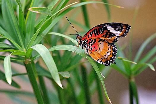 Orange Butterfly by Joe Urbz