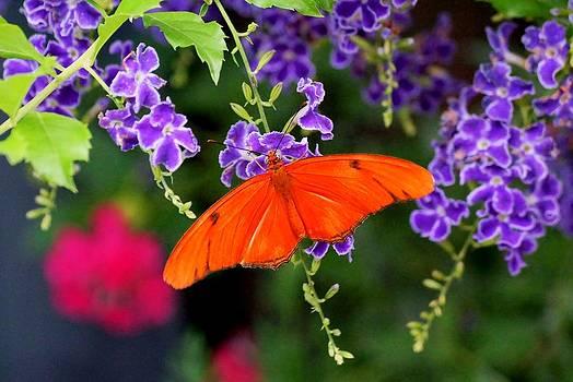 Orange Butterfly by Katelyn Bird