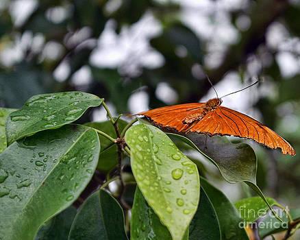 Orange Butterfly by Nora Martinez