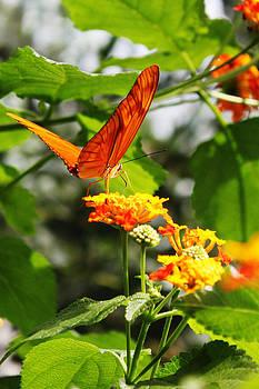 Orange Butterfly by Pamela Lecavalier