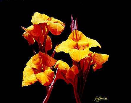 Orange Cannas by Gary  Hernandez