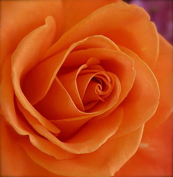 Orange Comes Softly by Michele Myers