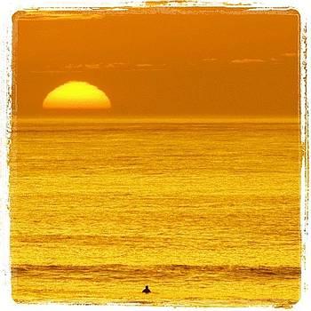 Orange Cream by Matt Proehl