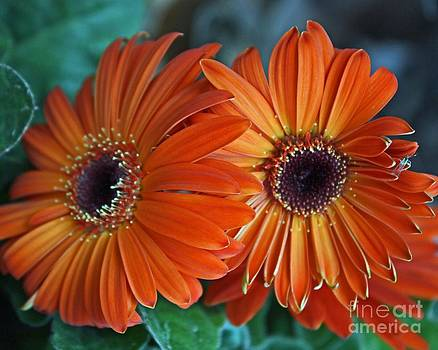 Orange Crush by Sherry Grochmal