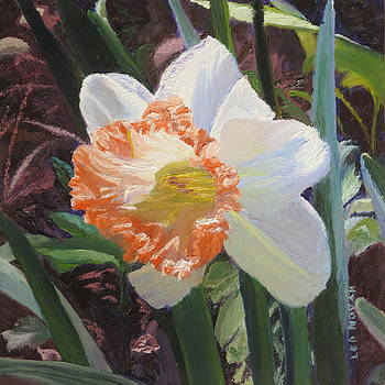 Lea Novak - Orange Daffodil