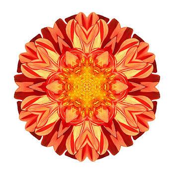 Orange Dahlia II Flower Mandala White by David J Bookbinder