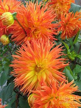 Ellen Miffitt - Orange Dahlias