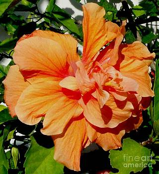 Gail Matthews - Orange Double Hibiscus
