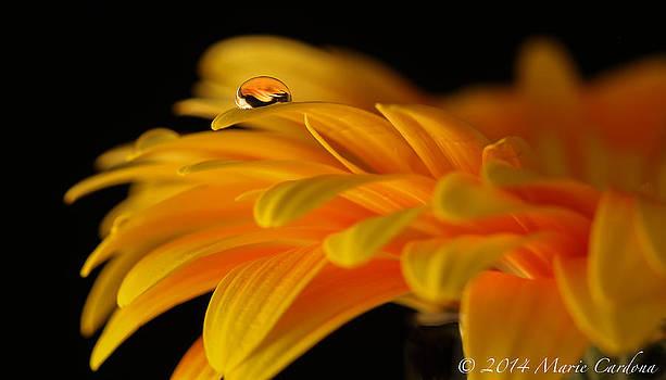 Orange Drop by Marie  Cardona