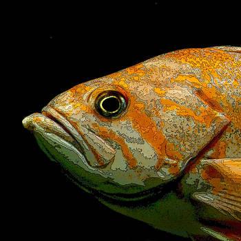 Art Block Collections - Orange Fish