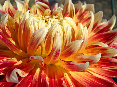 Baslee Troutman - Orange Floral art Dinner Plate Dahlia Flower