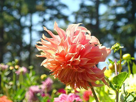 Baslee Troutman - Orange Floral Dahlia Flower Garden art Prints