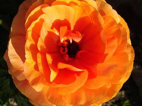 Orange Floral by Tamara Bettencourt