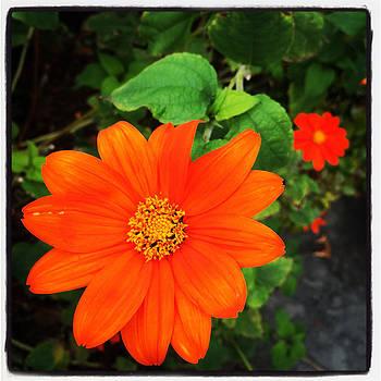 Orange Flower by Kathleen Anderle