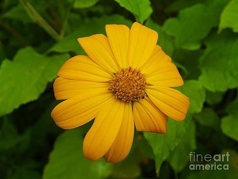 Orange Flower by Melissa McDole
