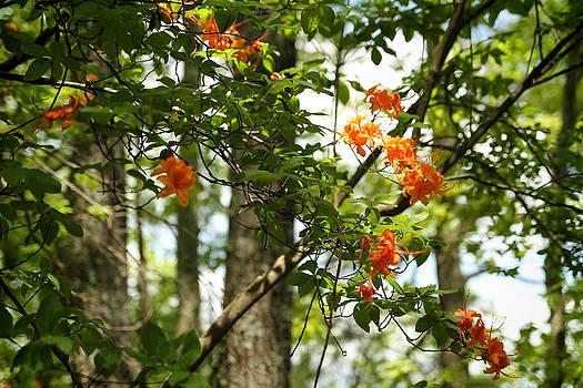 Orange Flower Tree H by Dulce Levitz