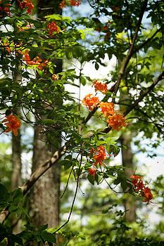 Orange Flower Tree V by Dulce Levitz