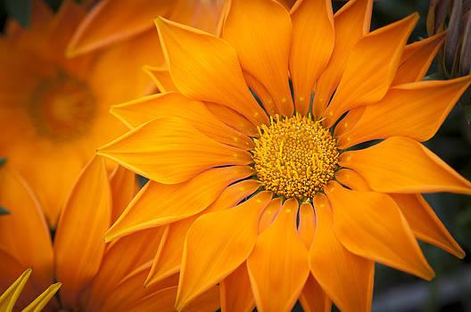 Orange Flowers by Chad Davis