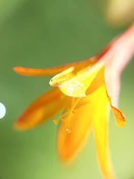 Orange Glistening Flower by Laura Lovell