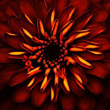 Orange Glow Flower by Donna Betancourt