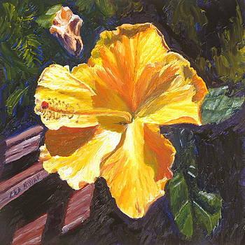 Lea Novak - Orange Hibiscus in Strong Sunlight