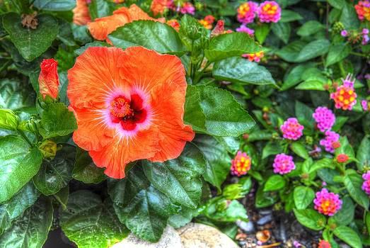 Orange Hibuscus by Donald Williams