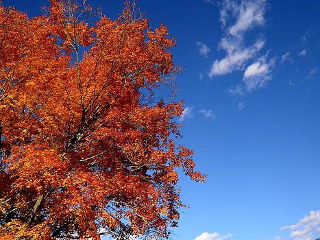 Kate Gallagher - Orange Leaves in a Blue Sky