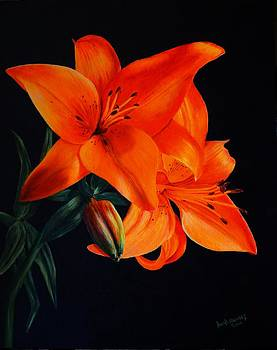 Orange Lilly by David Hawkes