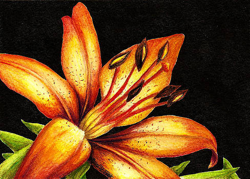 Orange Lily by Michelle East