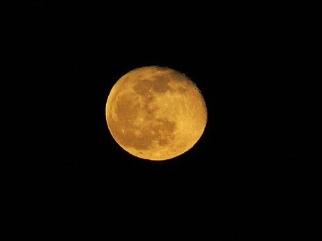 Orange Moon by Stephen Melcher