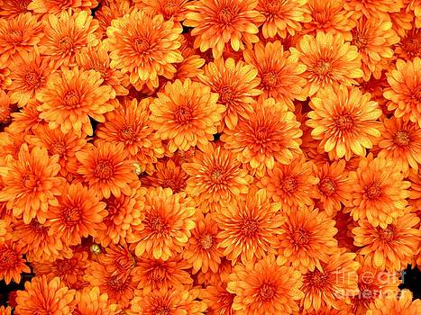 Christine Stack - Orange Mums
