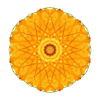 Orange Nasturtium I Flower Mandala White by David J Bookbinder