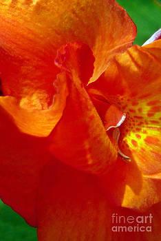 Orange Orchid by Chris Sotiriadis