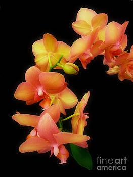 Scott B Bennett - Orange Orchids