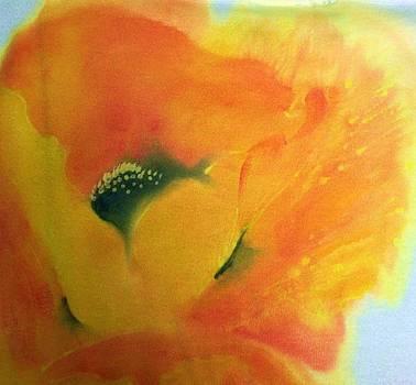 Orange Oriental Poppy by Shan Ungar