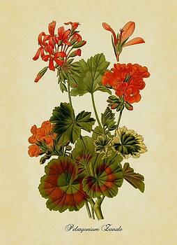 Orange Pelargonium by Little Vintage Chest
