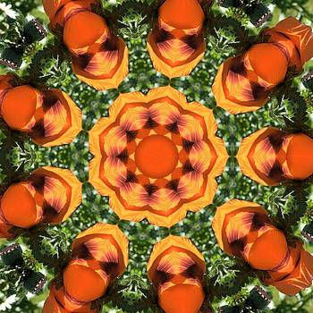 Valerie Kirkwood - Orange Poppy Kaleidoscope