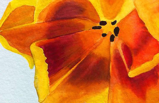 Orange Poppy by Ria Sharon