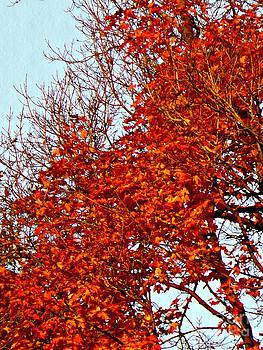Orange Red Blanket by Chris Sotiriadis